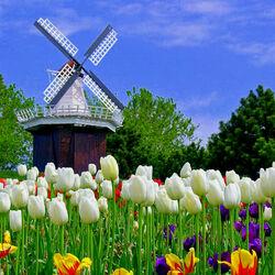 Пазл онлайн: Весна пришла