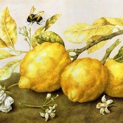 Пазл онлайн: Шмель и лимоны