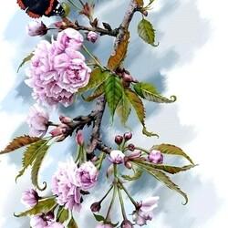 Пазл онлайн: Бабочка на цветке сакуры