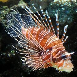 Пазл онлайн: Морская прелестница