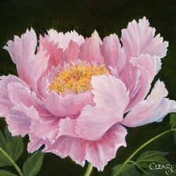 Пазл онлайн: Розовый пион