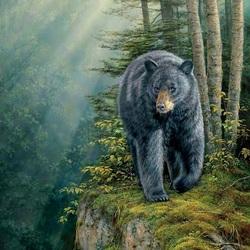 Пазл онлайн: Черный медведь