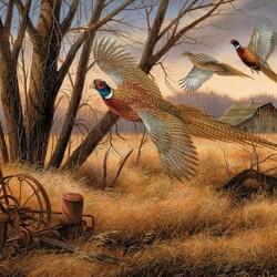 Пазл онлайн: Три фазана