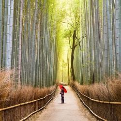 Пазл онлайн: Поющий лес