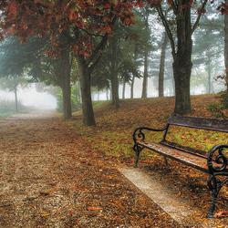 Пазл онлайн: Скамейка в туманном парке
