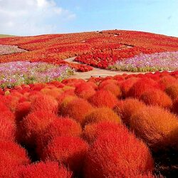 Пазл онлайн: Кохия. Сады Японии