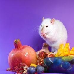 Пазл онлайн: Крыска с фруктами