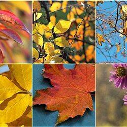 Пазл онлайн: Осенние мотивы