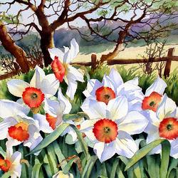 Пазл онлайн: Весна, нарциссы