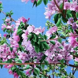 Пазл онлайн: Цветущие ветви .Китайская вышивка Су