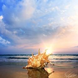 Пазл онлайн: Морская ракушка