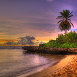 Пазл онлайн: Пальмы на острове