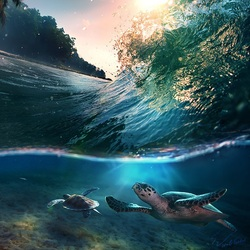 Пазл онлайн: Две черепахи