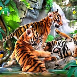 Пазл онлайн: Маленькие тигрята