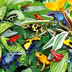 Пазл онлайн: Лягушечки