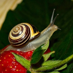 Пазл онлайн: На ягодке