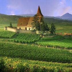 Пазл онлайн: Виноградник, Франция