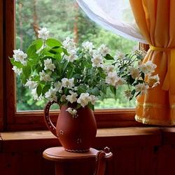 Пазл онлайн: Цветет жасмин