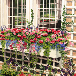 Пазл онлайн: Цветы под окном