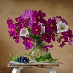 Пазл онлайн: Фиолетовая космея