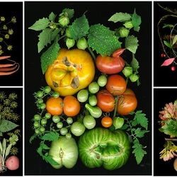 Пазл онлайн: Время собирать плоды