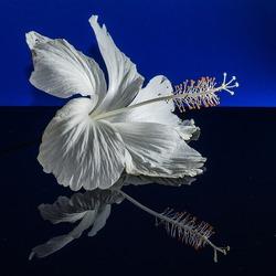 Пазл онлайн: Цветок прекрасных женщин