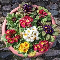 Пазл онлайн: Ключи весны