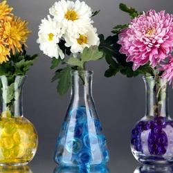 Пазл онлайн: Ряд хризантем