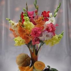 Пазл онлайн: Разноцветные пики гладиолусов