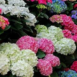 Пазл онлайн: Парад цветов