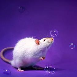 Пазл онлайн: Мыльные пузырики и крыска