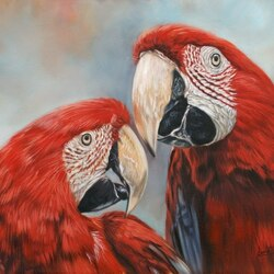 Пазл онлайн: Красные попугаи