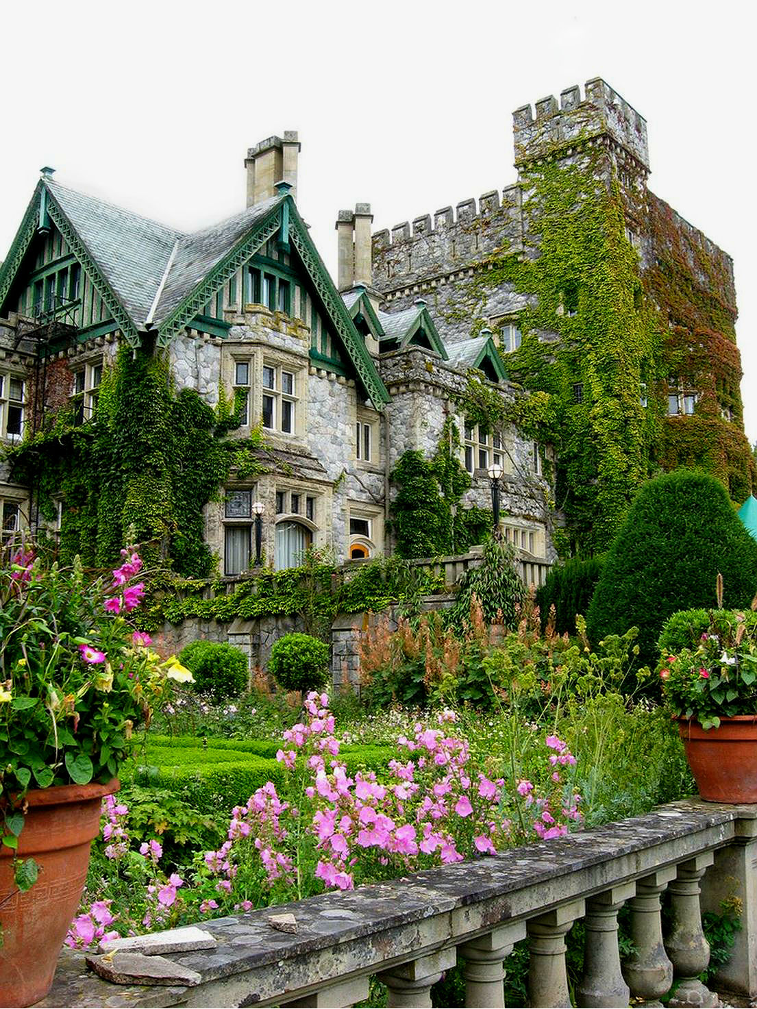 Картинки розы в замке