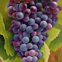 Пазл онлайн: Виноградная гроздь