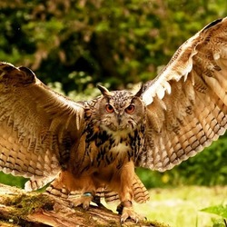 Пазл онлайн: Раскрывая крылья