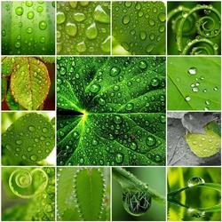 Пазл онлайн: Роса на листве
