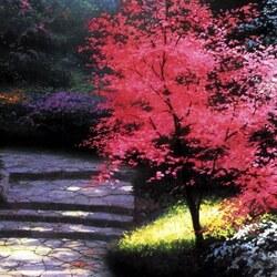 Пазл онлайн: Алое дерево