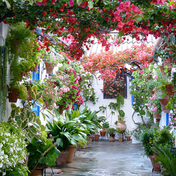 Пазл онлайн: Фестиваль цветочных двориков в Кордобе