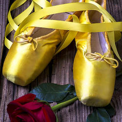 Пазл онлайн: Желтые пуанты и роза