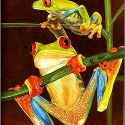 Пазл онлайн: Лягушки