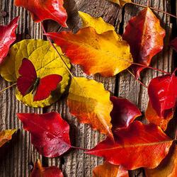 Пазл онлайн: Осенние листья и красная бабочка