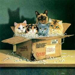 Пазл онлайн: Посылка с кошками
