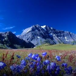 Пазл онлайн: Голубые цветы в голубых горах