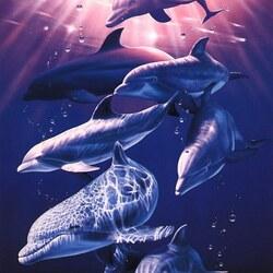 Пазл онлайн: Добрые дельфины