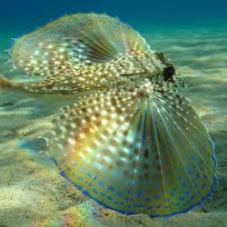 Пазл онлайн: Красота под водой