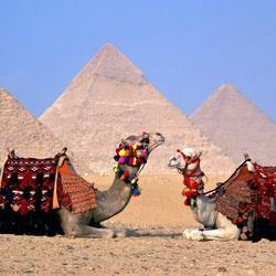 Пазл онлайн: Два верблюда