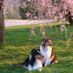 Пазл онлайн: Все любят весну