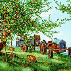 Пазл онлайн: Сбор яблок