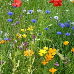 Пазл онлайн: Разноцветие