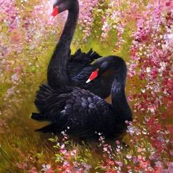 Пазл онлайн: Пара черных лебедей